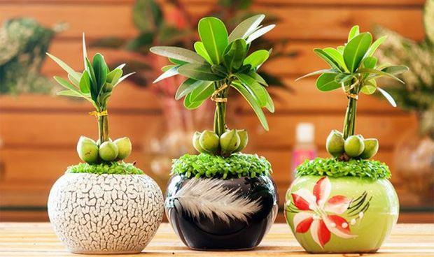 12 con giáp nên trồng loại cây phong thủy nào để may mắn?