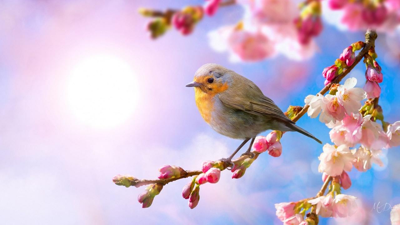 Quê hương mùa xuân