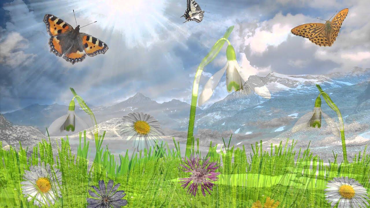 Con bướm xuân