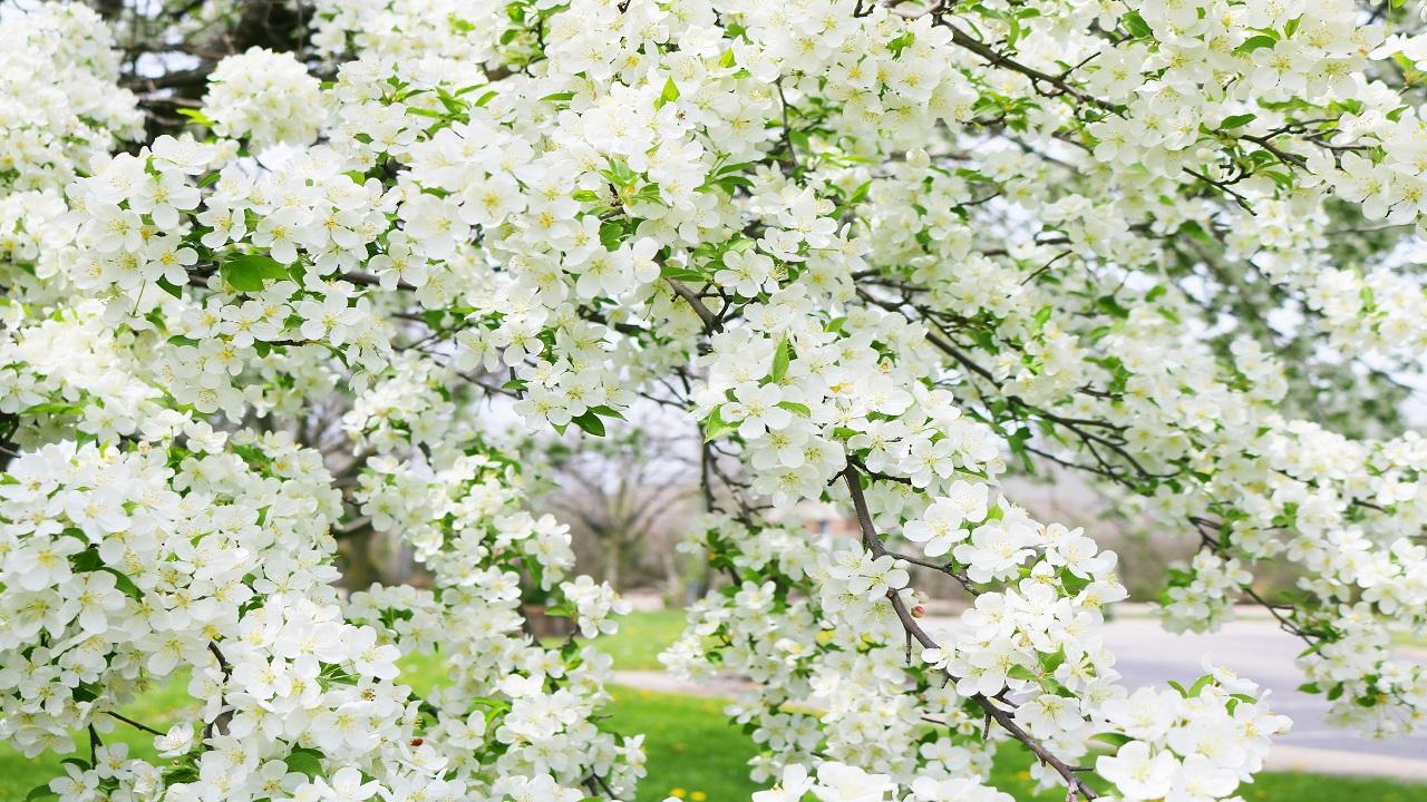 Nhạc không lời Điệp khúc mùa xuân