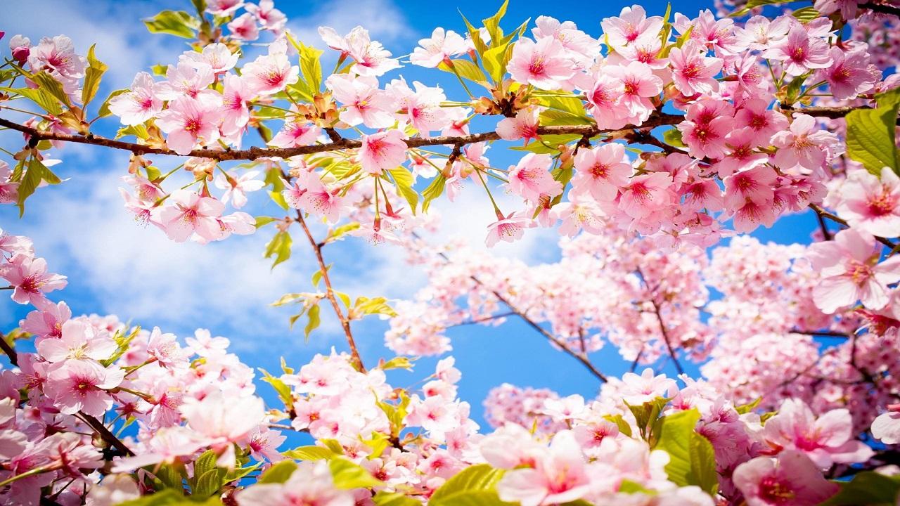 Nhạc không lời Mùa xuân ơi
