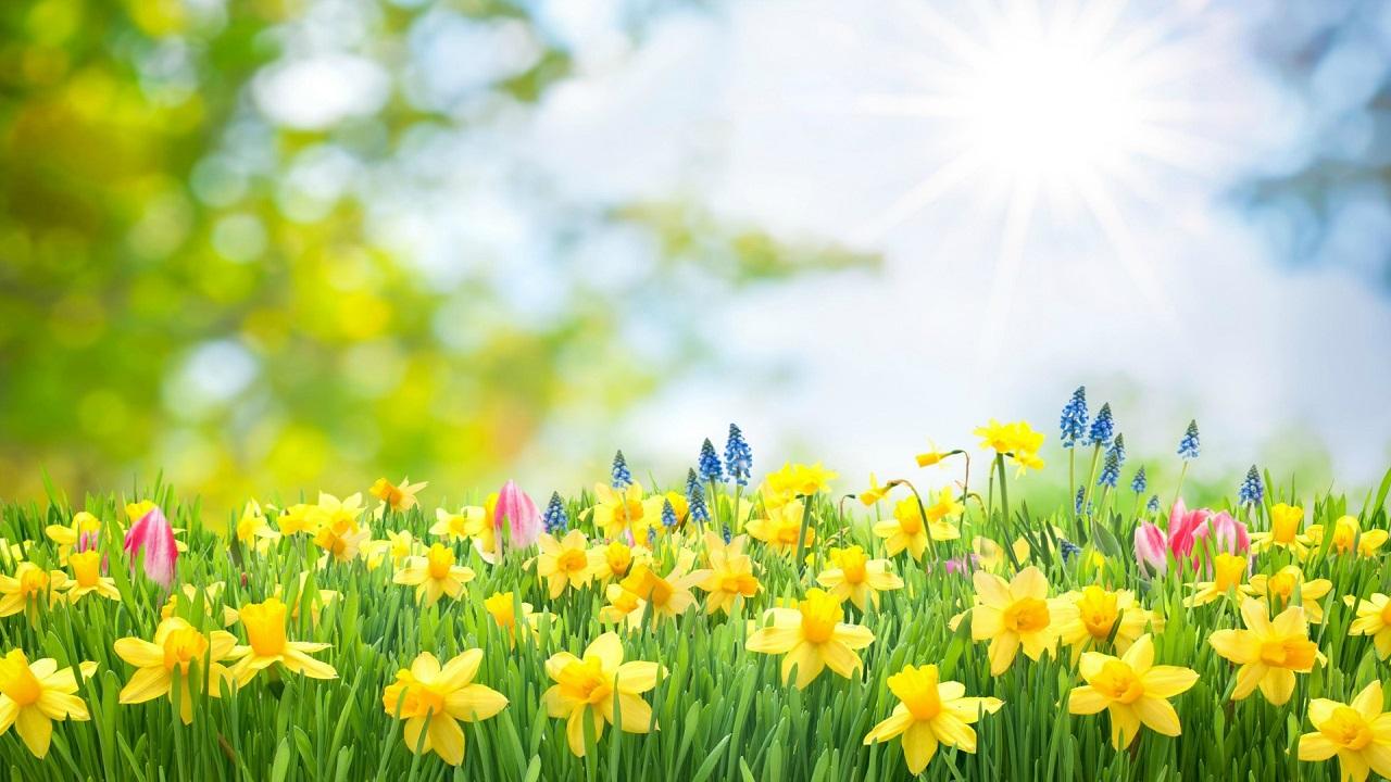 Những bài hát trữ tình về mùa Xuân hay nhất